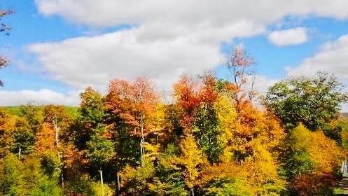 Falling into Fall Season Festivities