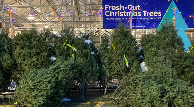 Choosing a Real Christmas Tree